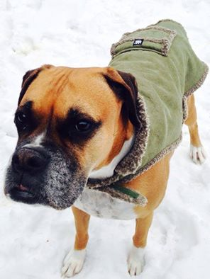 Prepare your pooch for cold weather Image