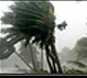 Tropical weather image